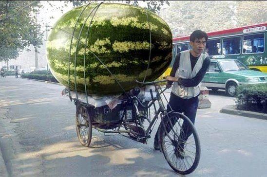 Самый большой в мире арбуз. Мировой рекорд по массе ...