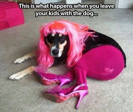 Funny Images Of The Day 38 Images Dog In Pink Wig Pantyhose
