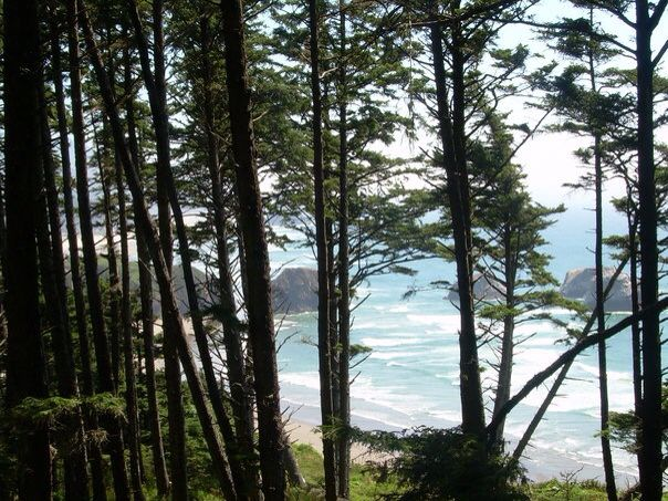 Oregon. Canon beach. Pacific Ocean. Travel. Adventure. Forest. Woods. Katy Merriweather.