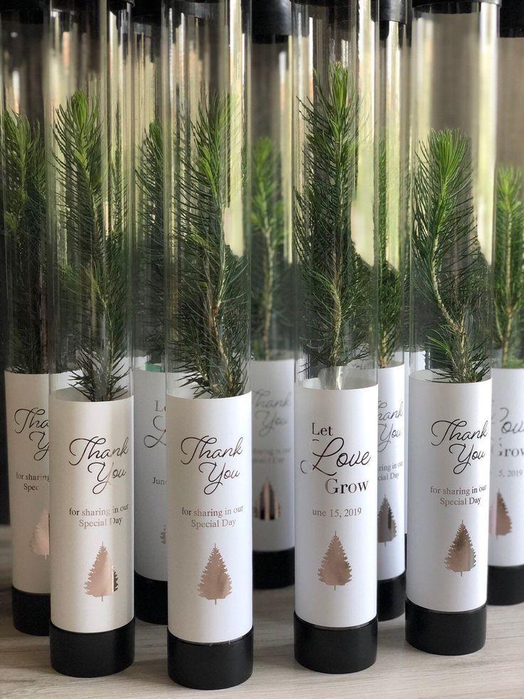 Let Love Grow Wedding Favor   White Pine Seedling