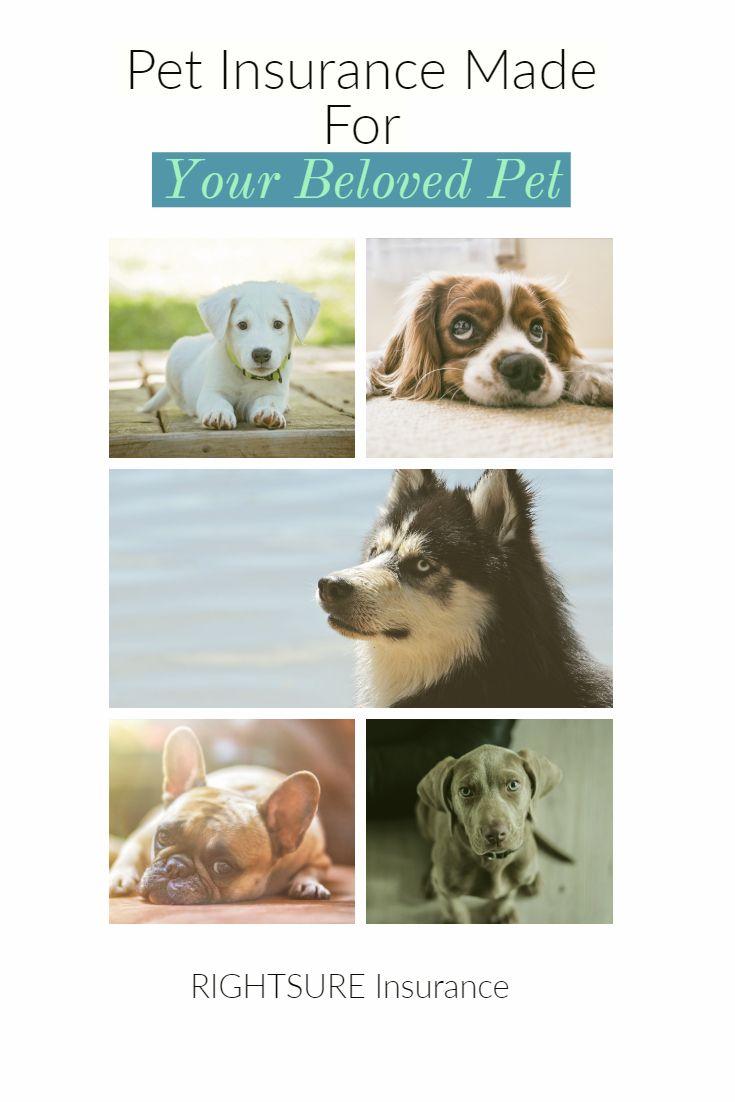 Dog health insurance arizona 5209017010 pets pet