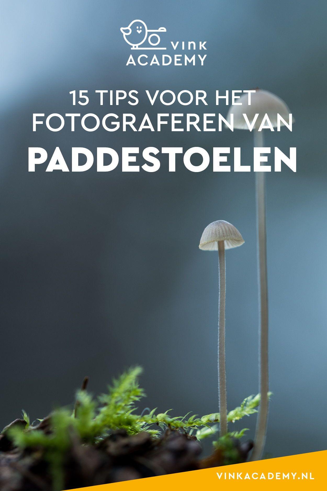 15 Tips Voor Het Fotograferen Van Paddestoelen Fotografie Tips
