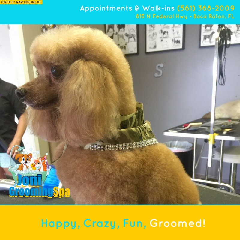 boca pet dog cat grooming care (With images) Pet