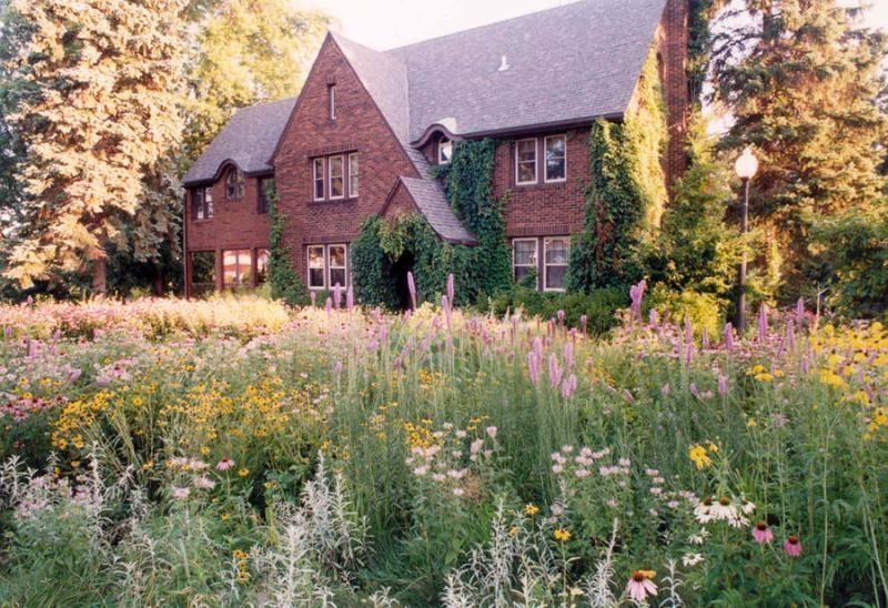 Prairie Landscape Wildflower Garden Lawn Alternatives Front Yard