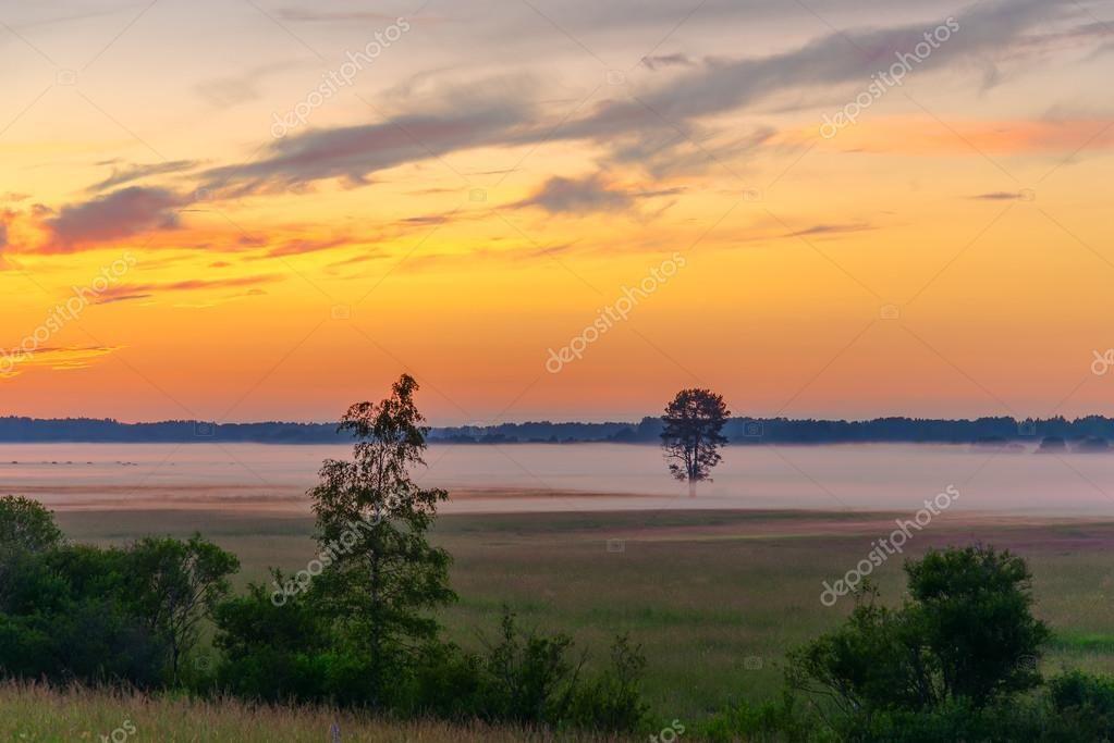 Sunset, field, tree, fog - Stock Photo , #Sponsored, #tree, #field, #Sunset, #Photo #AD