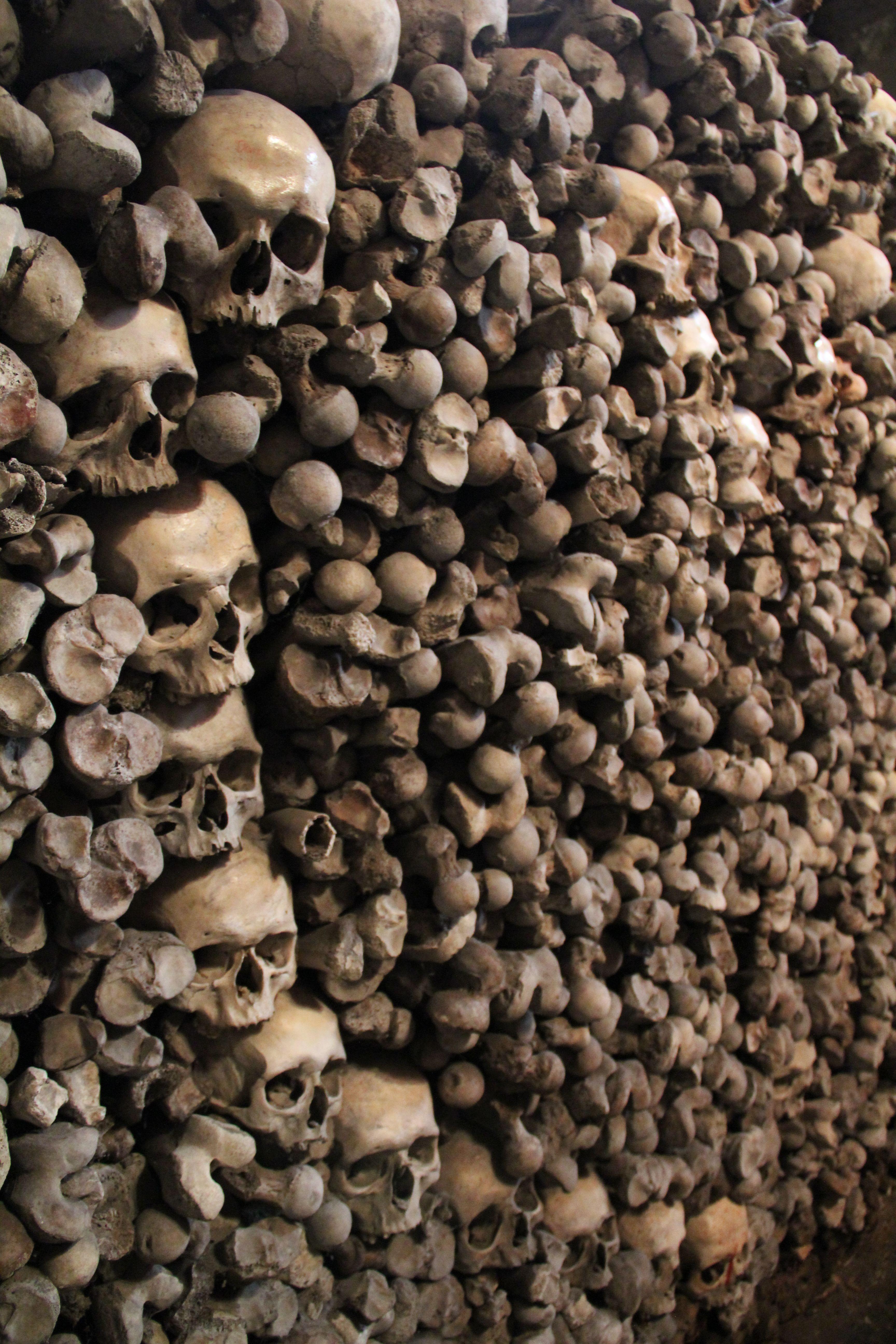 10+ Animal skulls for sale images