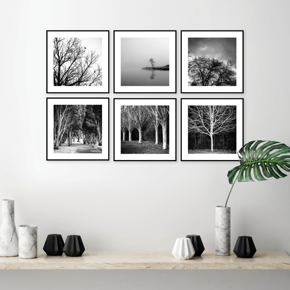Black And White Tree Photography Gallery Wall Digital Downloads Picture Wall Printable Art Set Square Nature Photo Wall Tasmania Australia Photography Gallery Wall Black And White Tree Gallery Wall