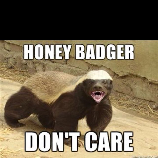 Honey badger dont give a shit - photo#49