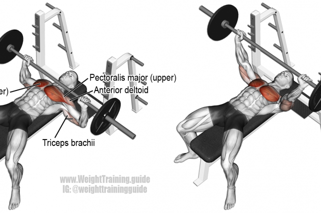Barbell Bench Press Exercise Illustration Bodybuilding Chest
