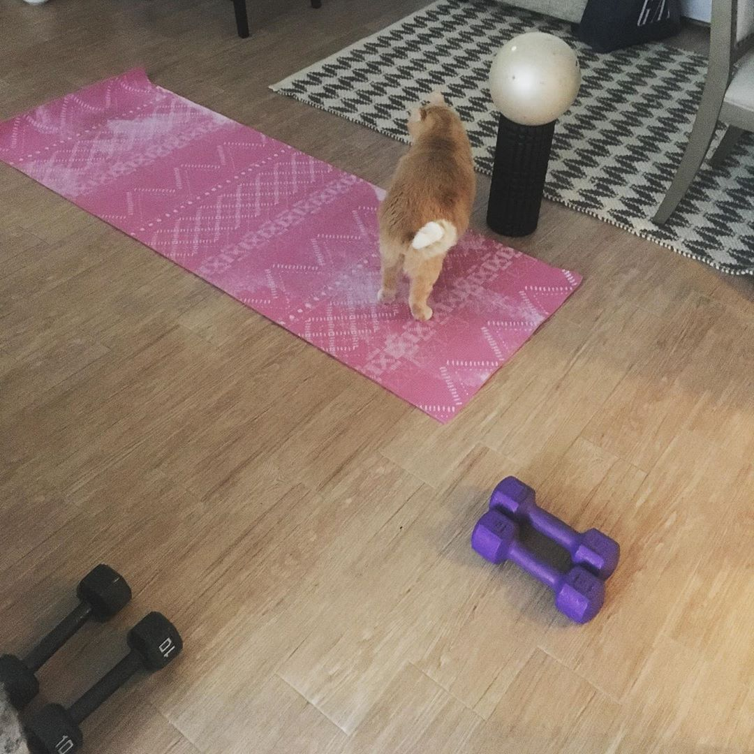 Puttin the ol #gingerkitten through an #ab circuit.  We all know he needs it. #fitlife #pilates #mat...