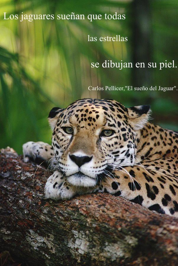 El sueño el Jaguar de Carlos Pellicer   Frases   Pinterest   Carlos ...
