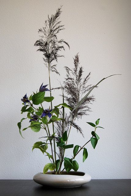 Ikebana Clematis and purple plumes by Otomodachi