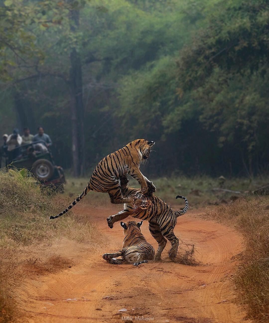 Pin By Jye Weng On Animals Animals Wild Wildlife Animals Animals
