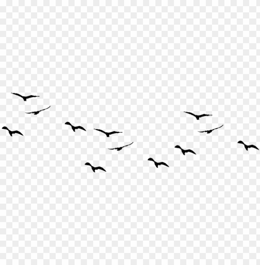 Birds Png Pic1 Birds Flying Vector Png Image With Transparent Background Png Free Png Images Birds Flying Png Images Camera Logos Design