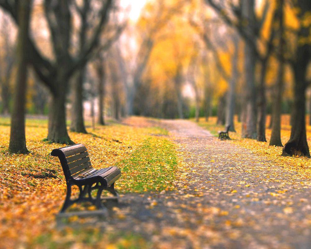 Park Bench Autumn Landscape Landscape Photography Nature Autumn Park