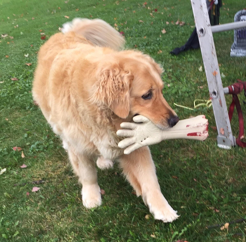 Rabid beast takes manus severed limb as trophy ifthtdox