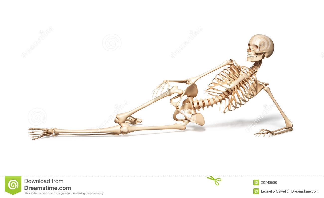 Pin By Bck On Drawing Painting Female Skeleton Female Human Skeleton