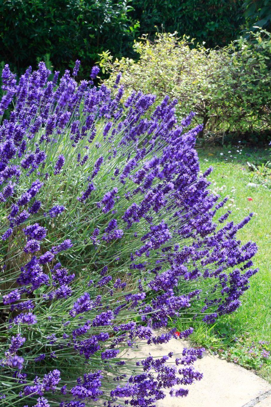 Plante Méditerranéenne Sans Arrosage plantes d'extérieur sans arrosage : 15 photos pour faire