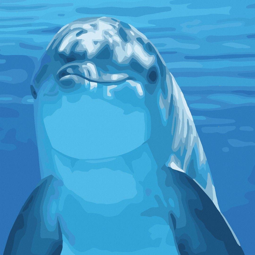 Delphin | Животные