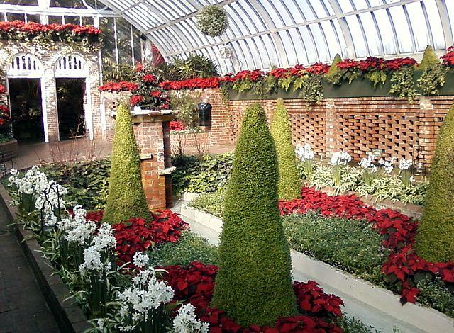 decorating+with+poinsettia | Poinsettia Display in the Sunken Garden