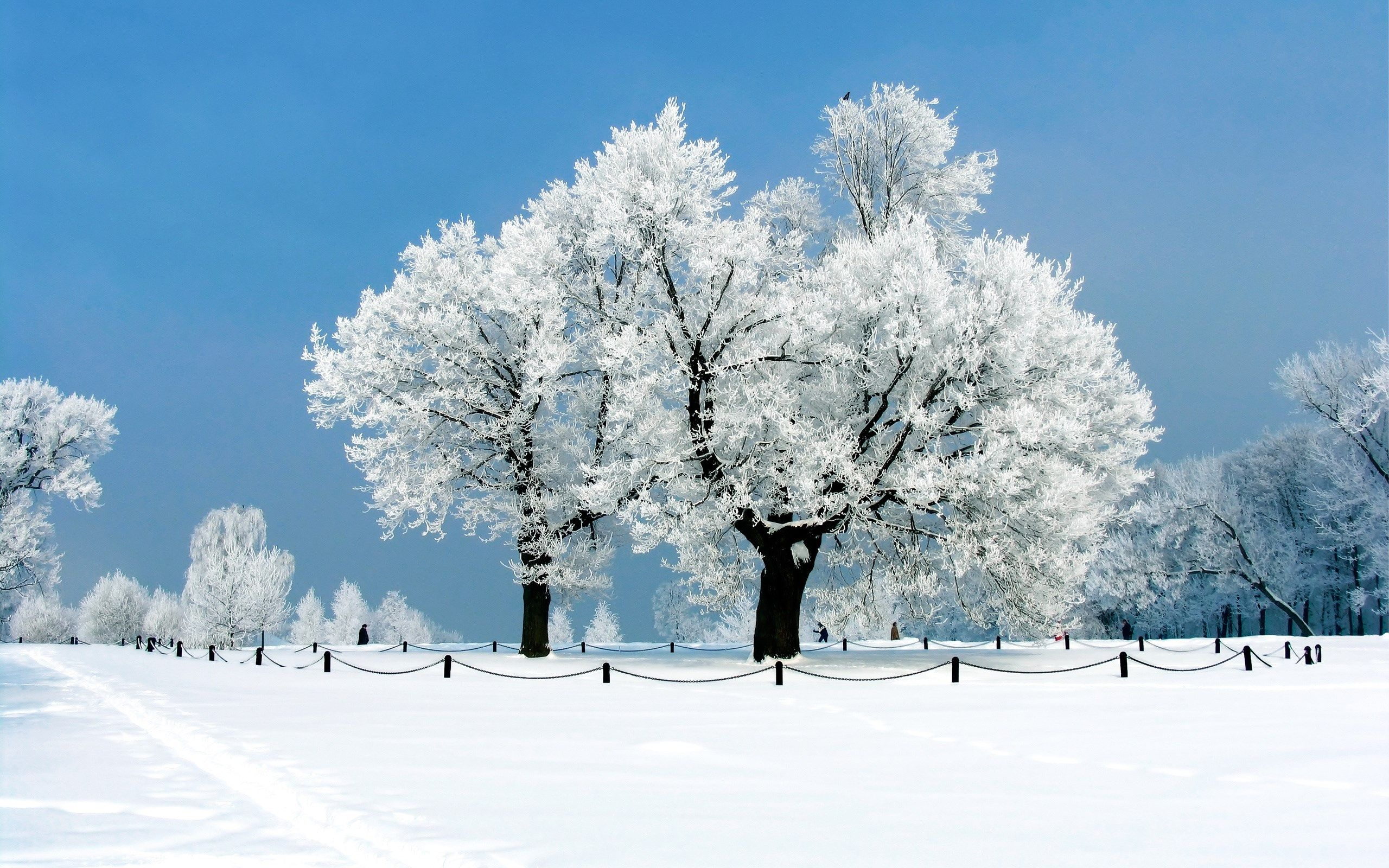 Winter Full HD Wallpaper High Definition High Quality
