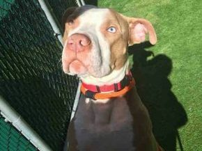 Batman Is Super Urgent Please Share To Save This Sweet Baby Dedicated To Saving Nyc Shelter Animals Shelter Dogs Dog Adoption Cat Adoption