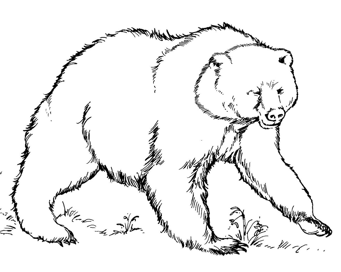grizzly bear - Google Search | Line Drawings for Literacy ...