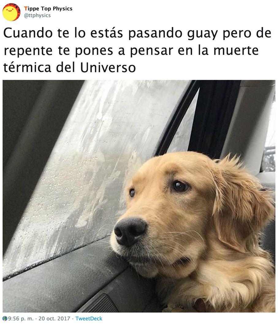Ttphysics Muerte Pensar Perro S B U Termica Twitter Universo Golden Retriever Dog Memes Retriever