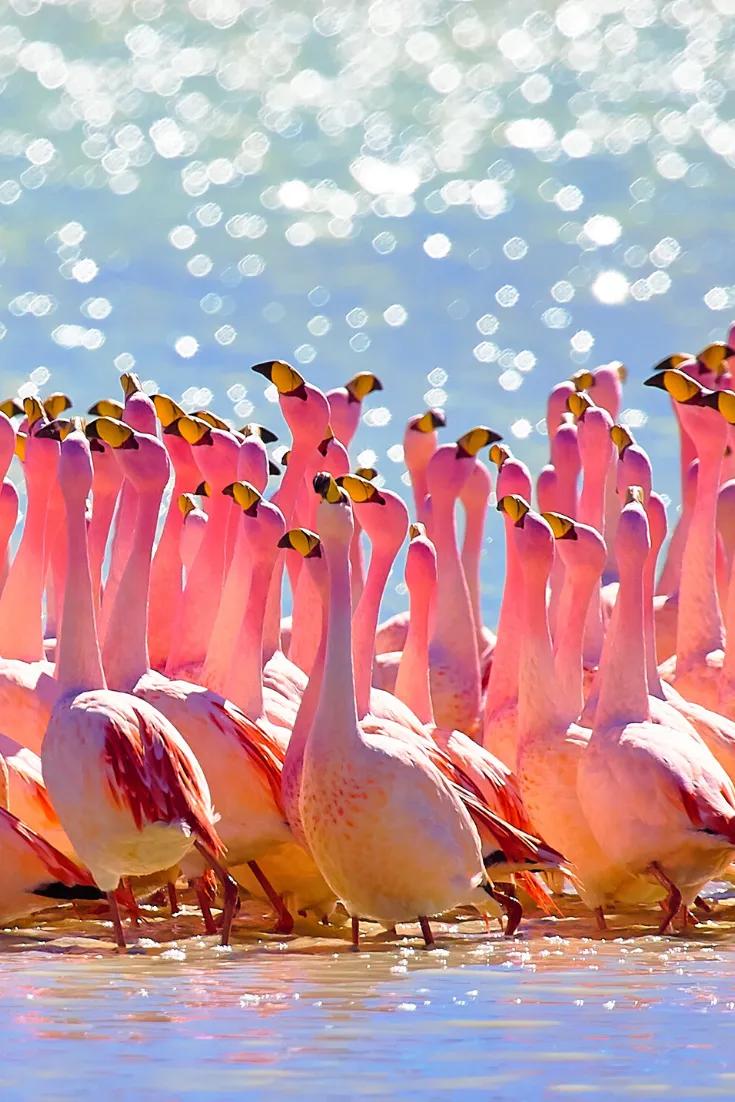 How To Tour Salar De Uyuni The Largest Salt Desert Of Bolivia In 2020 Beautiful Birds Flamingo Bird Photography