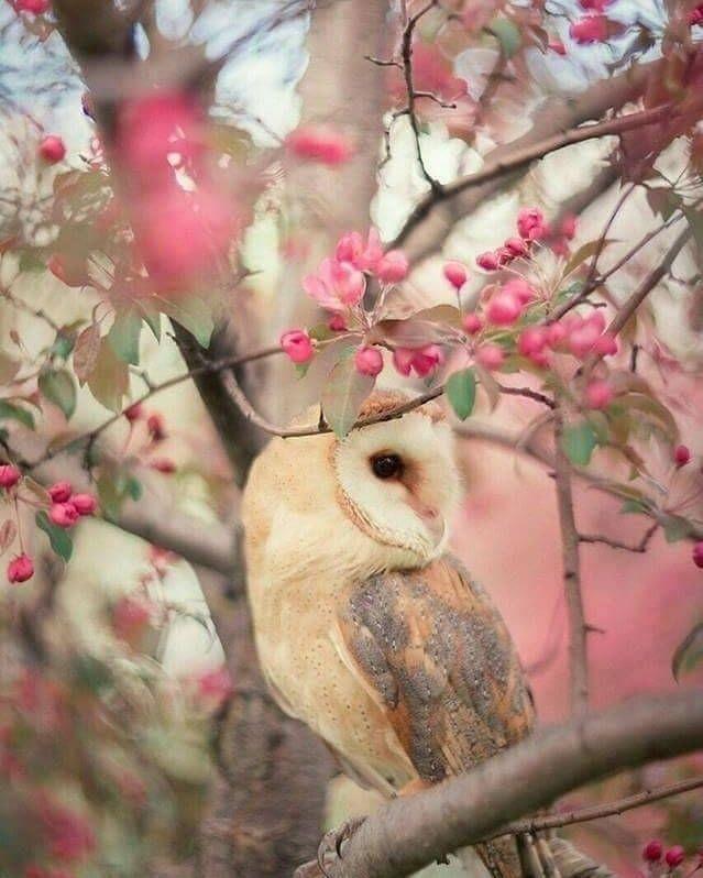 "owl_one on Instagram: ""#Animal #wildlife #nature #wildlifepictures #wildlifephotographer #wildlifephotography #naturepictures #naturephotography #owls #owl…"""