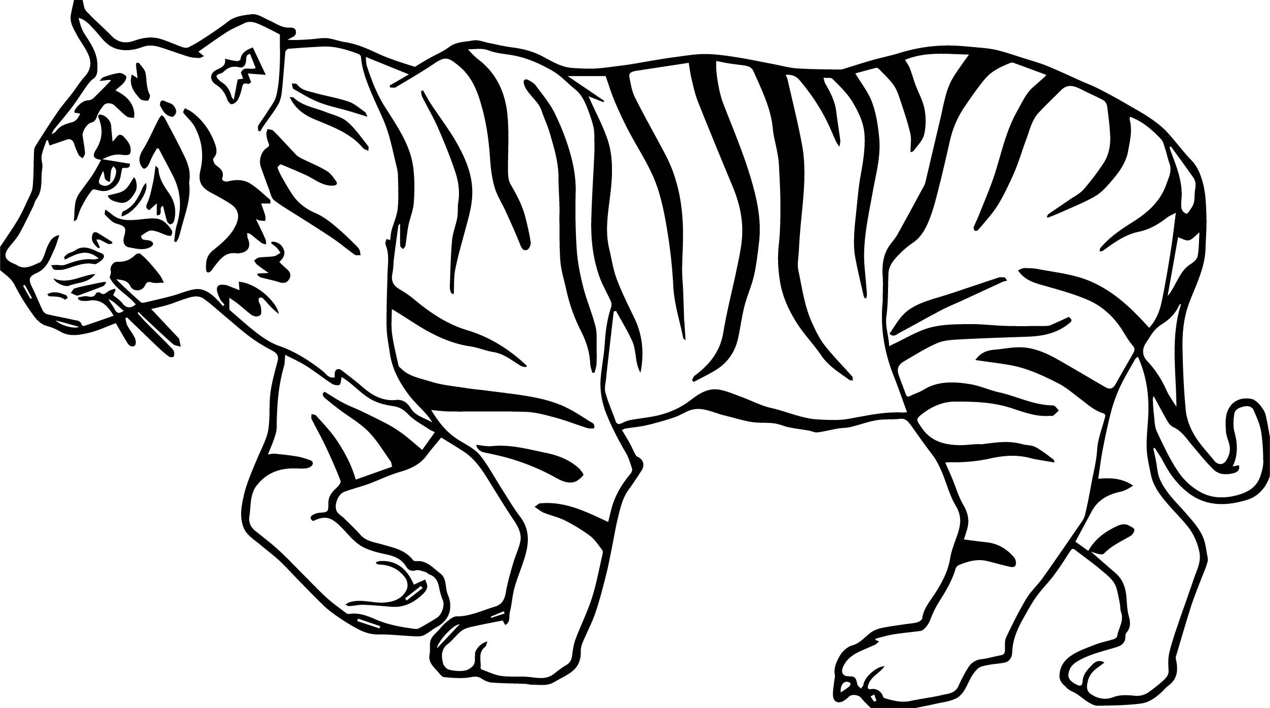 Nice Tiger Walk Coloring Page Paper Animals Coloring Pages Tiger Sketch