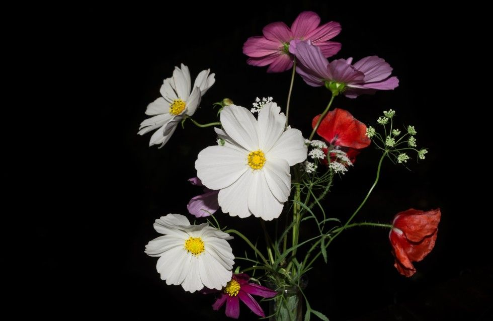 A collection of wild flowers, taken with a black backdrop.
