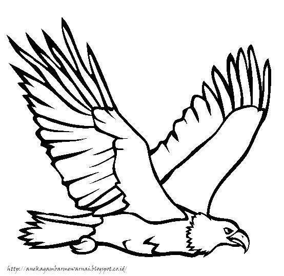 Aneka Gambar Mewarnai Gambar Mewarnai Burung Elang Untuk Anak Paud Dan Tk