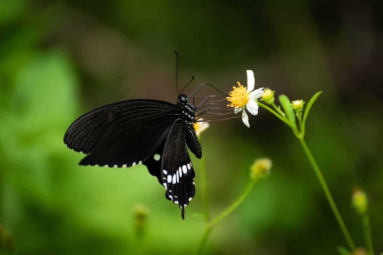 Pin by Cindy Badtke on Butterflies Butterfly wings