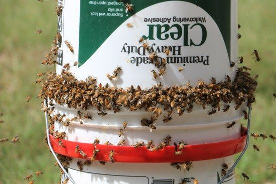 If you have several colonies of bees in your yard, feeding ...