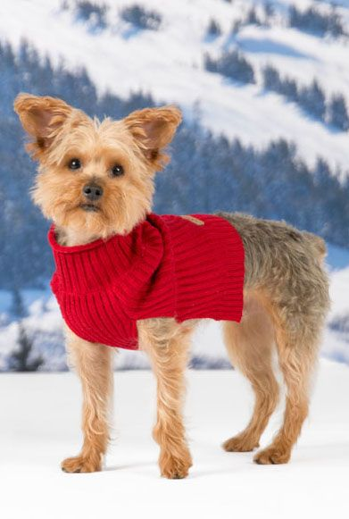This Eddie Bauer Dog Sweater Is Sewn From Cozy Ribbed Fabric Pets