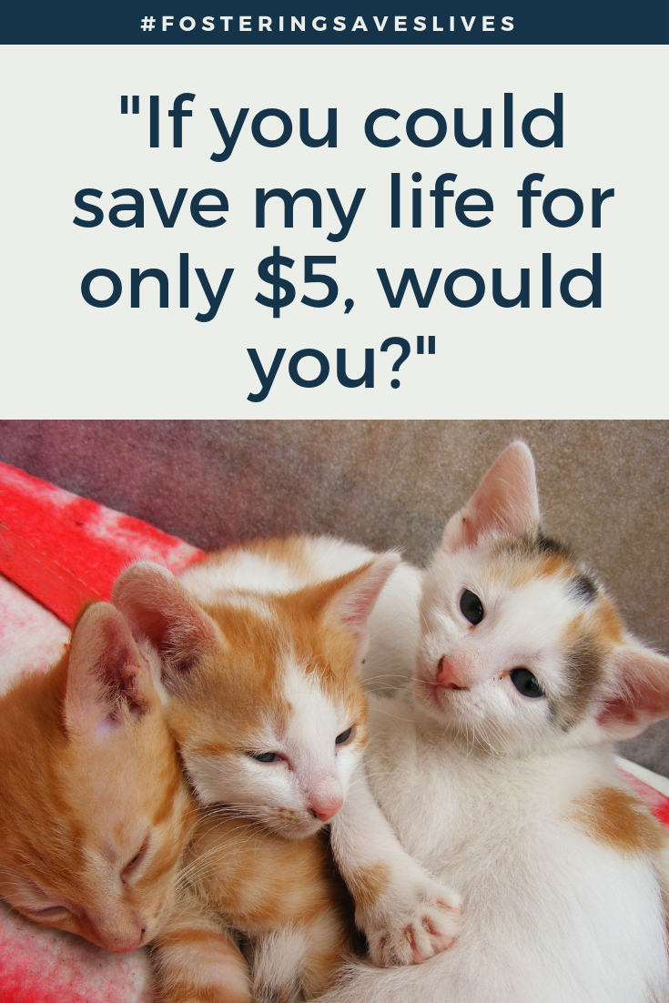 We Recently Joined Our Local Animal Shelter S Foster Program But With Limited Resources We Are In Need Of Some Help Purr Lease Cat Care Cats Foster Kittens
