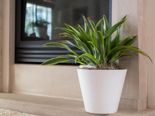 Modern and functional too, the  Nimbus Intelligent Watering System  will keep plants hydrated while you are on vacation or just feeling neglectful. More of a traditionalist and don't like the mod-design? Slip the Nimbus into your favorite pot and let Mother Nature do the rest.