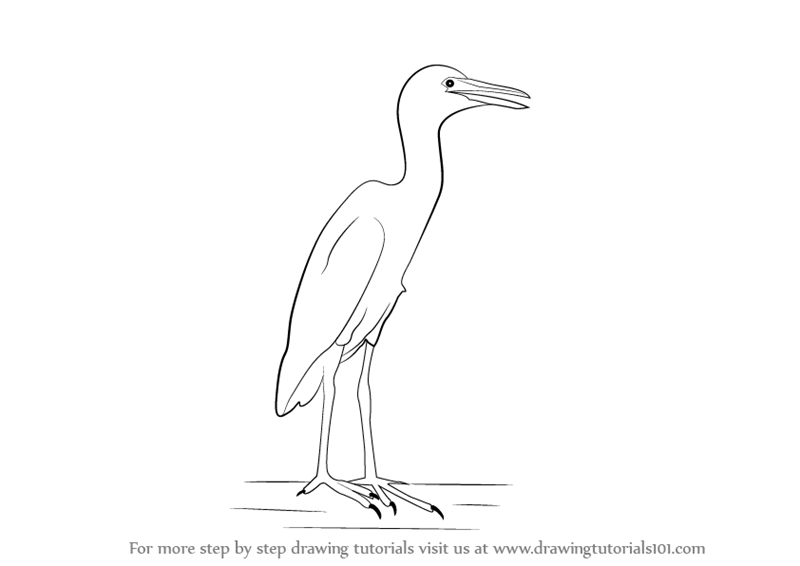 Learn How To Draw A Cattle Egret Birds Step By Step