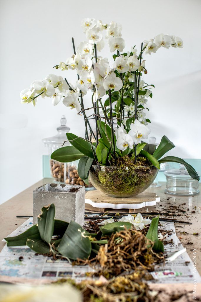 Orchidee Phalaenopsis Quatre Saisons Au Jardin Arrangements D Orchidees Orchidee Phalaenopsis Culture Des Orchidees