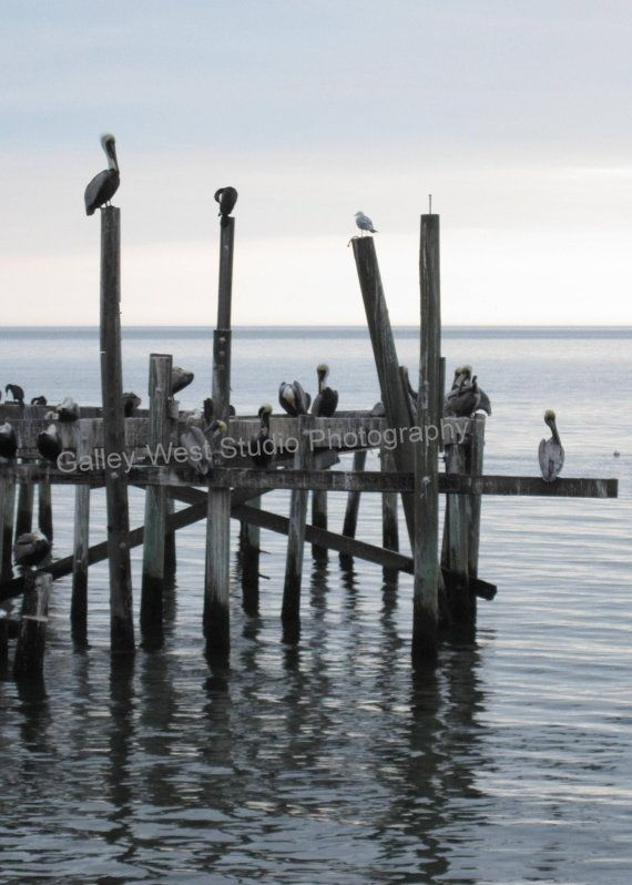 The Hang Out Pelicans of Cedar Key FLA by GalleyWestStudio on Etsy, $10.00