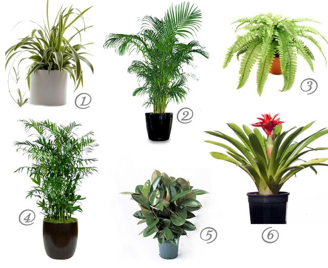 cat safe house plants for cleaner air spider plant