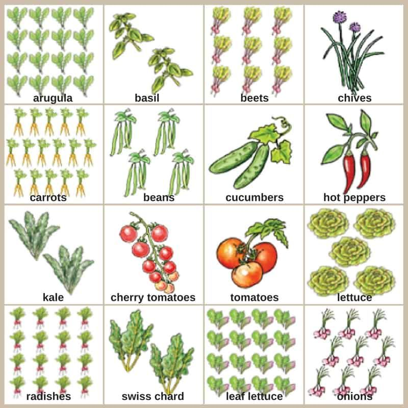 Small Vegetable Garden Plans For Even The Smallest ...