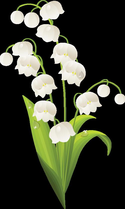 nature muguet porte bonheur pinterest muguet fleurs. Black Bedroom Furniture Sets. Home Design Ideas