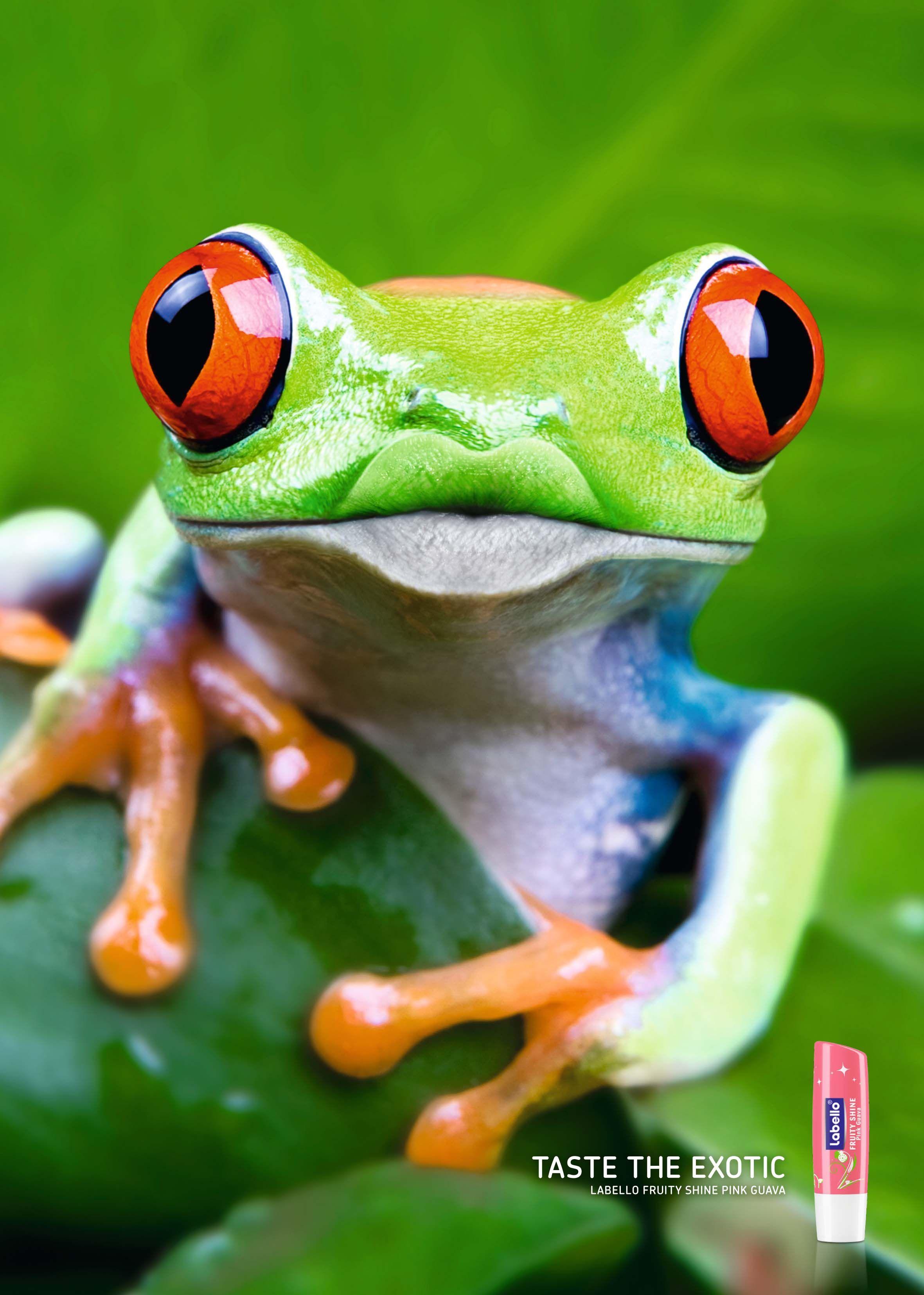 Labello: Gepard, Frog