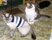 30 Ideas Crochet Sweater Pattern Easy Small Dogs #dogcrochetedsweaters 30 Ideas Crochet Sweater Pattern Easy Small Dogs #dogs #crochet #dogcrochetedsweaters