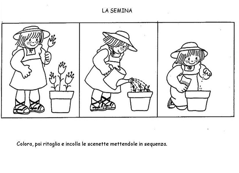 Dal seme alla piantina cerca con google scuola piante for Schede didattiche sequenze temporali