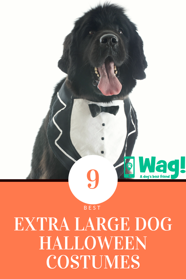 9 Best Extra Large Dog Halloween Costume Ideas Of 2018 Wag