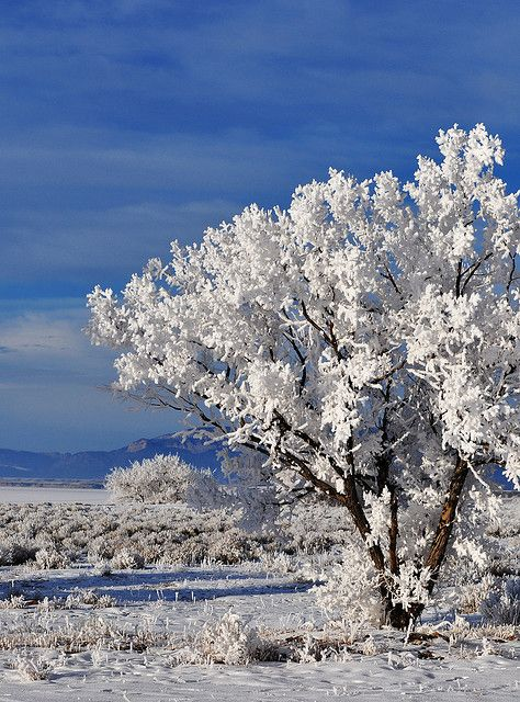 Beautiful Winter Landscape in Casper, Wyoming - Let's Be Candid. Wyoming Vacation Wyoming, Casper Wyoming