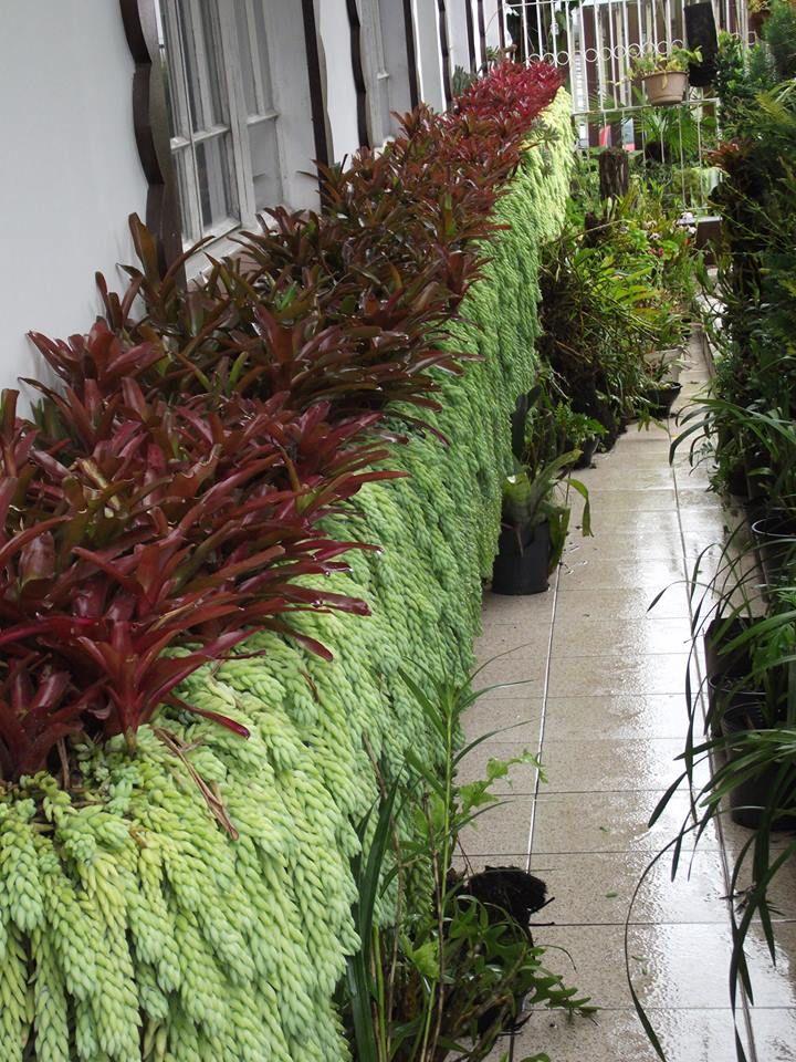 Low Maintenance Hanging Plants Outdoor